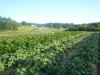 healthy-plants-2012