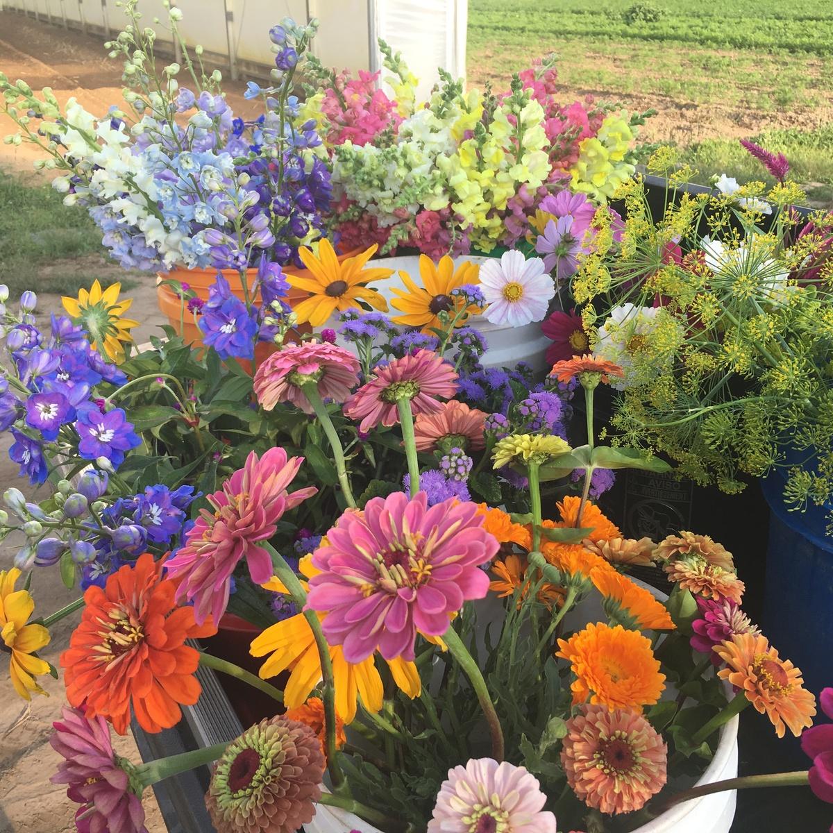 Flowers-Harvested