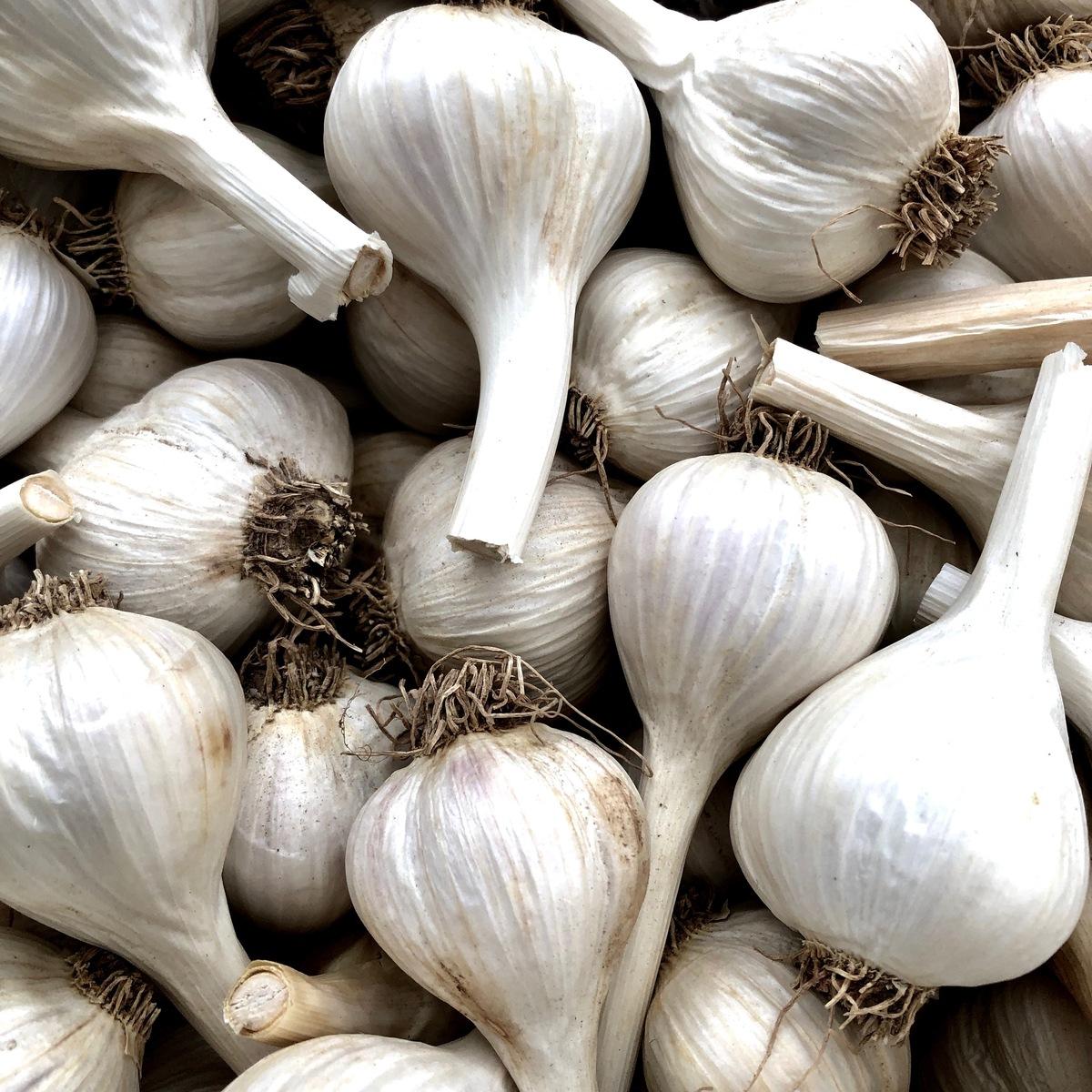 Garlik