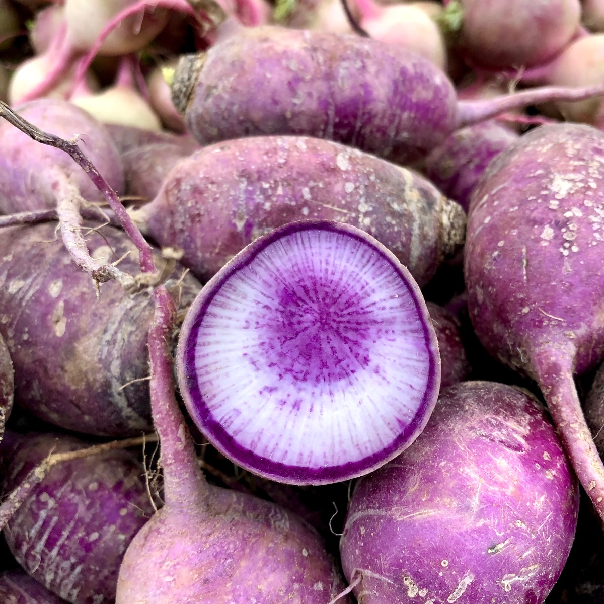 Purple-Daikon