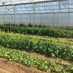 Greenhouse-2